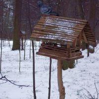 Кормушка для птиц, Голицино