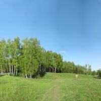 Wood, Panorama (180°), Домодедово