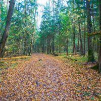 Осенний лес (До вандалов на квадроциклах), Дубки