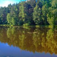 Лесное озеро 2014, Дубки