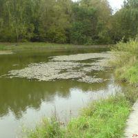 Озеро рядом с Власихой, Дубки