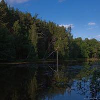 Лесное озеро, Дубки