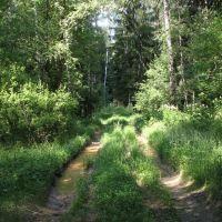 Велопрогулка в лесу, Дубки