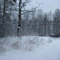 Зима, Дубки