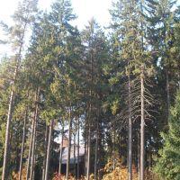 Trees, Дубки