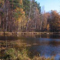 золотая осень, Дубки