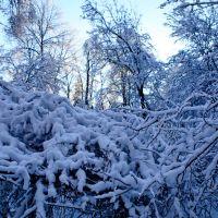 Зима 2011, Дубки