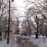Ледяной дождь 2011, Дубки