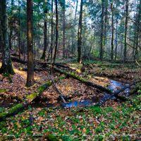 Лесной ручей, Дубки