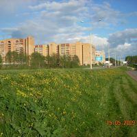 Цветёт одуванчик/The dandeliones are flowering., Дубна