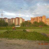 Свежескошенная трава/Mowed grass., Дубна