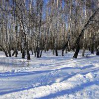 """Лес у ж/д платформы """"Весенняя"""". Начало марта 2011 г., Железнодорожный"""