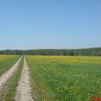 ::Климовск, поле на Весенней::, Железнодорожный