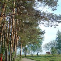 ::Опушка леса на Весенней::, Железнодорожный