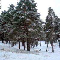Зима в парке, Жуковский