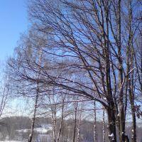 Old Oak Tree, Загорск