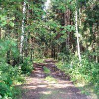 Проезжие накатанные дороги, Загорянский