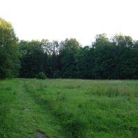 Полянка в лесу, Загорянский