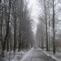 Аллея по ул. Горького, Запрудная