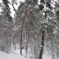 Winter forest 2, Звенигород