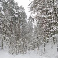 Winter forest 3, Звенигород