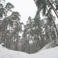 Winter forest 4, Звенигород