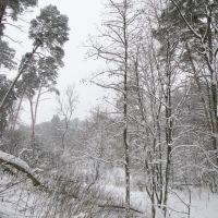 Winter forest 5, Звенигород