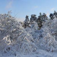 Яблоневый сад, Звенигород