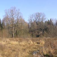 Лес около Щепкина болота, Зеленоград