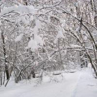 Снежные кружева (Snow laces), Икша