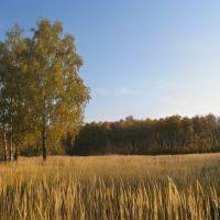 Золотая осень (Golden autumn), Икша