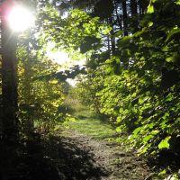 Путь к свету! (The path to the light! ), Икша