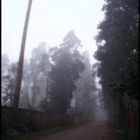 Ленинская в тумане / Leninskaya in the fog, Ильинский