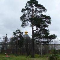 Истра. Новоиерусалимский монастырь, Истра