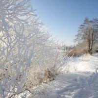 Белый берег, Керва