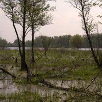 Около озера Святое, Керва
