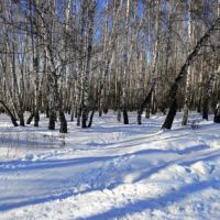"Лес у ж/д платформы ""Весенняя"". Начало марта 2011 г., Климовск"