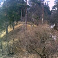 Лес 1, Кожино