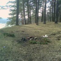 Лес 2, Кожино