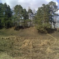 Лес 3, Кожино
