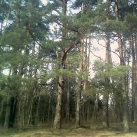 Лес 5, Кожино