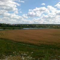 Поле пшеницы недалеко от Внуково, Кокошкино