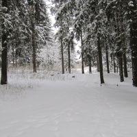 лес, Колюбакино
