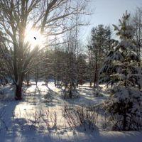 Зима в Сосновой роще, Колюбакино