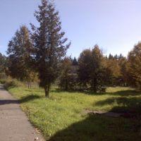 Дорога к спорткомплексу, Колюбакино