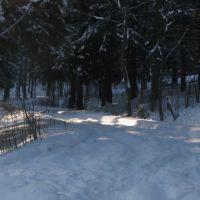 Winter forest, Колюбакино