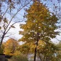 Yellow Trees, Красково