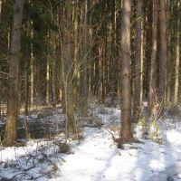 Весеннее таяние снега в лесу, Крюково