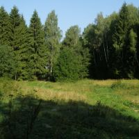 Лесная поляна., Крюково