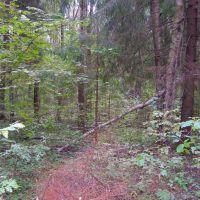 Смешанный лес., Крюково